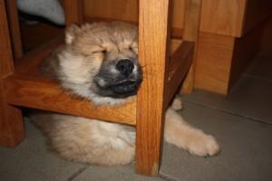 Sover under stol